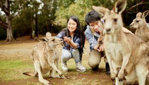 Image Credit: Tourism Tasmania
